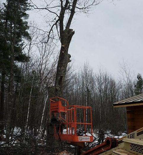 Tree Removal Service Kv Tech Construction Northern
