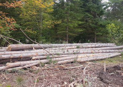 Delimbed logs